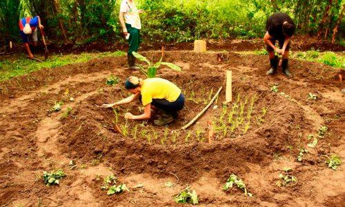 Rio-Muchacho-Organic-Farm